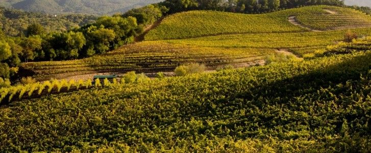 family-winery-vineyard-min